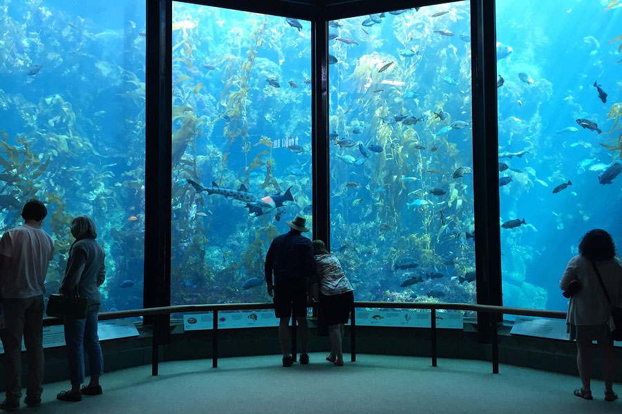 Visitors view fish in the Kelp Forest tank at The Monterey Bay Aquarium
